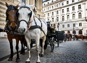 Oblíbený dopravní prostředek ve Vídni